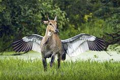 Special Mention: JAGDEEP RAJPUT – 'Pegasus'
