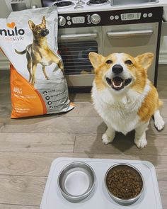 Our turkey & sweet potato grain-free recipe includes 85% animal-based proteins which means more amino acids to fuel lean muscles. And with our low carbohydrate ingredients and advanced probiotics, you'll know your best friend is getting the nutrition they deserve. Grain Free Dog Food, Free Food, Sweet Potato Recipes, Amino Acids, Muscles, Dog Food Recipes, Grains, Dog Cat, Corgi