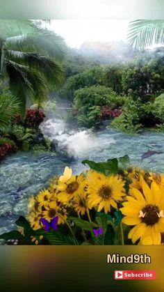 Beautiful Love Pictures, Beautiful Photos Of Nature, Beautiful Gif, Nature Pictures, Summer Wallpaper, Nature Wallpaper, Good Evening Greetings, Art Beat, Bright Paintings
