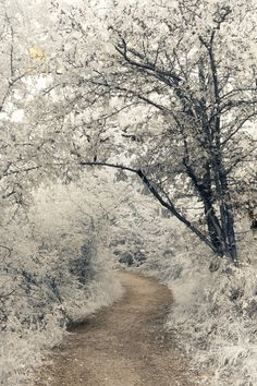 Infrared Pictures Of Outdoor Scenes by Hannes Runelof Will Amaze You (PHOTOS) | Huffington Post