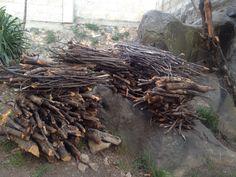 Ordenar ramas y varas secas después de la poda de árboles en invierno