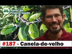 Autor da Própria Saúde - Canela-de-velho [Artrose, artrite, reumatismo, dores na coluna] - YouTube