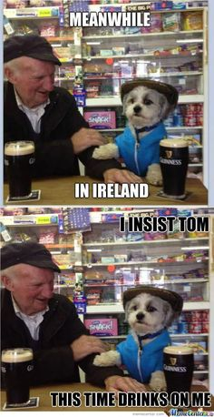 """An Irish """"hair of the dog"""" (or the hair of the dog that bit me"""") - a drink to help the hangover from the night before. In my new home in France they call a hangover a """"geule de bois"""" - a gob of wood - just as silver tongued as us Norn Irish! Funny Irish Memes, Irish Jokes, Funny Jokes, Irish Humor, Hilarious, Stupid Jokes, Stupid Funny, Native American Quotes, American Symbols"""