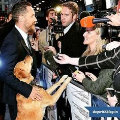 Red Carpets are where you see Hollywoods leading men with their lady loves but for Tom Hardy his adopted mutts take all the attention. Tom recently took Woody the dog he adopted from the road to the premiere of his upcoming movie. #dogadoption #dogloversofinstagram #petstagram #hollywood #petstagram #dogoftheday #adoptdontshop #tomhardy