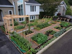 Hey Honey, you know that backyard you neveer want to mow, how BOUT THIS: veggie garden ideas