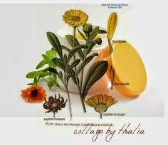 Πως κάνουμε αλοιφή από λουλούδια καλέντουλας Simple Minds, Herbs, Health, Plants, Health Care, Herb, Plant, Planets, Salud