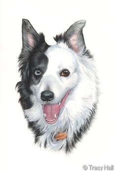 pet portrait artist tracy hall - realistic watercolour portraits of pets and paintings of dogs, cats, horses. Commission a painting of your pet. Dog Paintings, Watercolor Paintings, Tracy Hall, Border Collie Art, Dog Drawings, Tole Painting, Dog Art, Pet Portraits, Painting Inspiration