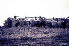 Abandoned Delinted Cottonseed Mill in Farmersville, Texas | Robert Leman Purvin was born in Farmersville.