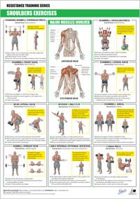 printable muscle building workout chart - Google Search