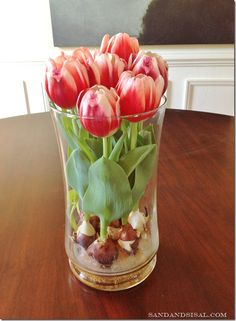 Sweet! How to force tulips to grow indoors. I'm totally doing this! My forced bulbs have already started coming up, but this vase idea is so much prettier than the green plastic containers I have!