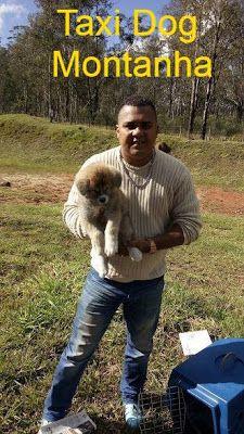 TAXI DOG MONTANHA TRANSPORTE DE ANIMAIS NO RIO DE JANEIRO: CURITIBA-PR para JUIZ DE FORA-MG
