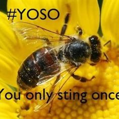 Some entomologist humor...