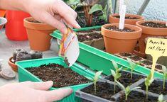Säen Sie die Samen in kleine Pflanzschalen mit Anzuchterde Garden Hose, Planter Pots, Vegetables, Flowers, Plants, Outdoor, Gardening, Facebook, Patio