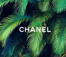 Inspiring image amazing, art, background, chanel, cute, designer, fashion, green, hawaii, header, hot, july, love, luxury, money, new, palm tree, places, quote, rich, shops, summer, tropic, vintage, wallpaper, white, words #3006062 by Bobbym - Resolution 500x357px - Find the image to your taste