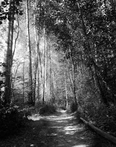 Dark forest, gothic photography, black and white photography, dark art, nature print, pathway, Halloween on Etsy, $22.00