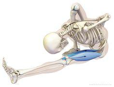 Stretching y Entrenamiento: Principales efectos fisiologicos: