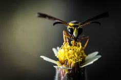 be a bee Photo by Ihwan Budiawan -- National Geographic Your Shot