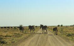 Kruger National Park's 10 best self-drives   Getaway Travel Blog