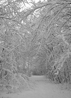 Winter snow canopy - Wisconsin