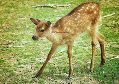 Fawn Fine Art Photography Brant County by TheFancifulGardener, $6.00