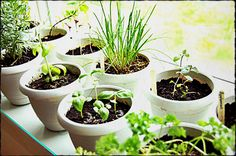 How to Grow Herbs Indoors at lifeyourway.net