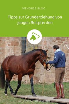 First tying, lunging & saddling: tips for basic training of young riding horses - Best Equitation Horse Barrel Racing Saddles, Barrel Racing Horses, Horse Saddles, Horse Halters, Les Reptiles, Horse Riding Tips, Horse Show Clothes, Types Of Horses, Horse Accessories