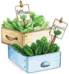 Want to grow some salad greens without the commitment of a whole garden? Cool weather veggies like lettuces and spinach are easy to start indoors (cabbage too!) especially if you get them started in these clever containers!