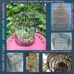 There's something so appealing about bird cages in a junk garden; filled with succulents, used to protect delicate special plants, or just as a vignette or display, there are no end of uses for them...