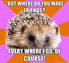 It's so true! It's amazing how much I get out of conversations with random people in malls and walmart. And everywhere.  #homeschoolhedgehog