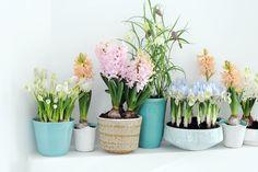 Lentebollen op pot. Weg met de winterdip! #mwpd #planten #lente