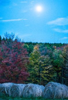 A Walk in the Woods - Valvano Pix