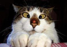 chat qui louche ! Pauvre bête :)