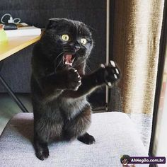Cat Lovers Community - Your Daily Source of Cat Stories and Funny Cat Memes I Love Cats, Crazy Cats, Cool Cats, Cute Funny Animals, Funny Animal Pictures, Cute Kittens, Cats And Kittens, Funny Cat Memes, Funny Cats