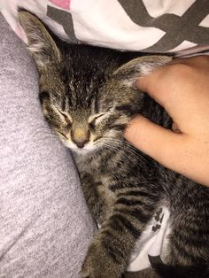 Image result for Worker Heard Kitten Meows Coming From Packaging Box and Found Tiny Kitty In Need of Love