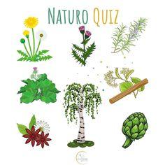 • Voici 8 plantes sauvages faciles à trouver dans la nature ou à cultiver chez soi... 🌿🎋🌸  Questions: 1️⃣ Quel est leur point commun? 2️⃣ Sauras-tu toutes les reconnaître? ______       #printemps #nature #quiz #questions #jouer #jeu #detox #plantes #plantessauvages #herboristerie #tisane #thé #naturelover #aunaturelt #naturel #remedenaturel #santéaunaturel #naturopathie #naturopathe Questions, Jouer, Coin, Blogging, Articles, Community, Dreams, French, Lifestyle