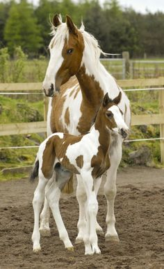 Beautiful mare and her foal!