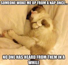 Don't wake Grumpy cat meme