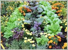 Lots of excellent info and articles about organic gardening...