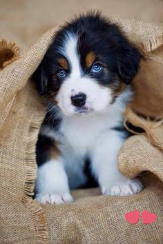 Puppies That Will Give You Feels Top 10 Healthiest Dog Breeds // In need of a detox? off using our discount code at.auTop 10 Healthiest Dog Breeds // In need of a detox? off using our discount code at. Cute Baby Animals, Funny Animals, Animals Dog, Funny Dogs, Wild Animals, Cute Animals Puppies, Cut Animals, Drawing Animals, Healthiest Dog Breeds