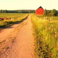 rustic & rural road - Finland - glorious hues
