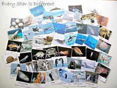 Free animals of Antarctica cards