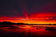 Heaven and Earth afire! Charlotte City, Haida Gwaii, Zoology, Heaven On Earth, Science And Nature, Archie, British Columbia, Mars, Islands