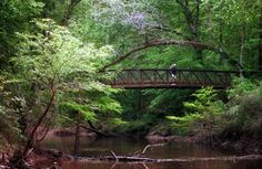 The Big Thicket - East Texas - Full of Piney Woods, Cypress Trees, Wildlife and lots of great nature.