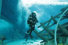 Think cleaning an aquarium tank is a meticulous process? Find out how Marine Life Park's divers do it at the world's largest oceanarium!