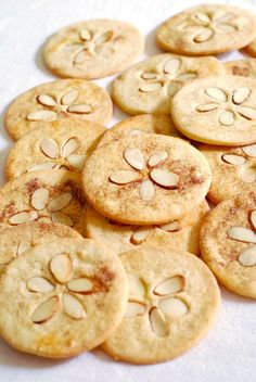 sand dollar cookies cute for a snack at the beach. It would be cute to take a tooth pick and make the little dots that sand dollars have.