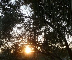 Sunrise through the trees in the early a.m.