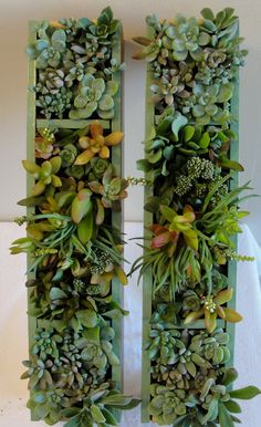 "Two Vertical Succulent Gardens with a Pretty Sage Colored Trim, Each Garden Measures 17 1/2""x4"""