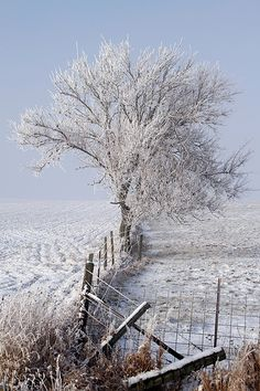 I wonder if this picture inspired the picture of the tree with the fence going around it.