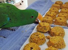 Recipes for feeding parrots including cooked bird food and bird bread. #parrotfood