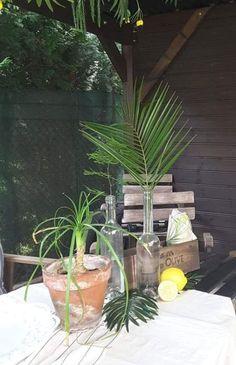Summer Fruit, Summer Flowers, Summer Vibes, Party Time, Palm, Garden, Nature, Plants, Instagram